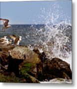 Gulls Of The Jersey Shore Metal Print