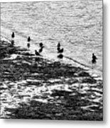 Gulls On The Shore Metal Print
