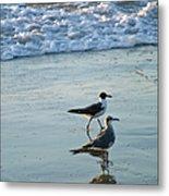 Gulls Strolling Tybee Island Beach Metal Print