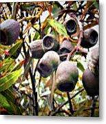 Gumnut Grouping Metal Print