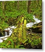 Gushing Through Ferns And Forest Metal Print