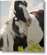 Gypsy Mare And Foal Metal Print