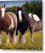 Gypsy Mares And Foal Metal Print
