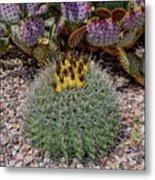 H D R Budding Cactus Metal Print