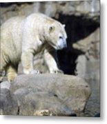 Habitat - Memphis Zoo Metal Print