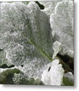 Hairy Leaf Metal Print