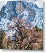 Half Dome Meadow Tree Winter Metal Print