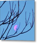 Half Moon Through The Trees Metal Print