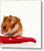 Hamster Eating A Red Hot Pepper Metal Print