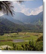 Hanalei Valley Taro Fields - Kauai Metal Print