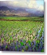 Hanalei Valley Taro Ponds Metal Print