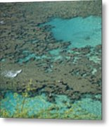 Hanauma Bay Reef And Snorkelers Metal Print