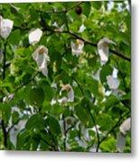 Handkerchief Tree Metal Print
