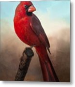 Handsome Cardinal Metal Print