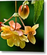Hanging Flower Metal Print