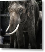 Hanging Out Metal Print by Joan Carroll