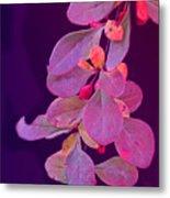 Hanging Purple Metal Print