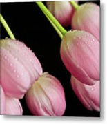 Hanging Tulips Metal Print by Tracy Hall