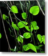 Hanging Vines Metal Print