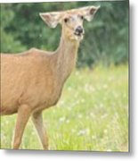 Happy Deer Metal Print