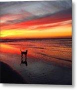 Happy Dog At Sunset Metal Print