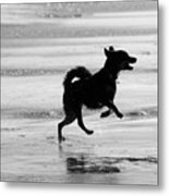 Happy Dog Black And White Metal Print