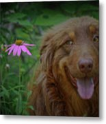 Happy Dog Days Metal Print