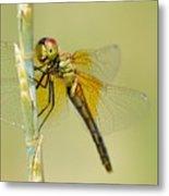 Happy Dragonfly Metal Print
