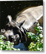 Happy Rhino Metal Print