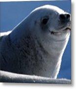 Happy Seal Metal Print