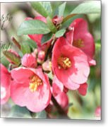 Happy Spring Flowering Quince Card And Poster Metal Print
