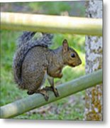 Happy Squirrel Metal Print
