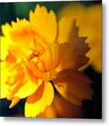 Happy Yellow Flower Metal Print