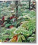 Hapu'u Fern Rainforest Metal Print