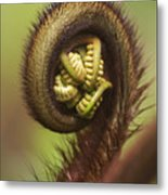 Hapuu Fern Frond Shoot Metal Print
