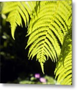 Hapuu Ferns Metal Print