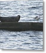 Harbor Seal Hangin With A Friend Metal Print