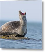 Harbour Seal Metal Print