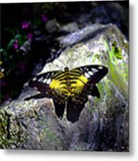 Hard Landing--clipper Butterfly Metal Print