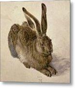 Hare Metal Print by Albrecht Durer