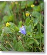 Harebell - Campanula Rotundifolia - Flower Metal Print