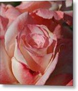 Harlekin Rose Metal Print