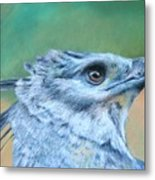 Harpy Eagle Two Metal Print