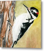 Harry The Hairy Woodpecker Metal Print