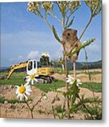 Harvest Mouse And Backhoe Metal Print