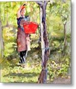 Harvesting Anna's Grapes Metal Print