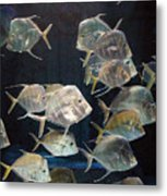 Hatchet Fish Metal Print