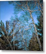 Haunted Trees Metal Print