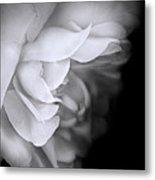 Haunting Beauty Monochrome Rose Metal Print
