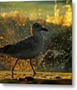Have A Walk By Th Sea Metal Print